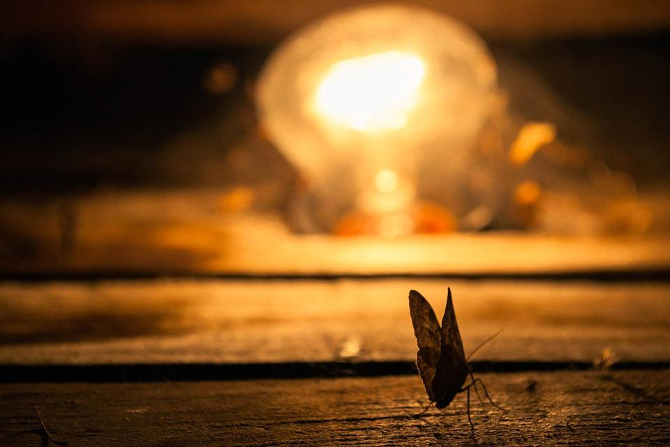 insecte attiré par la lumière