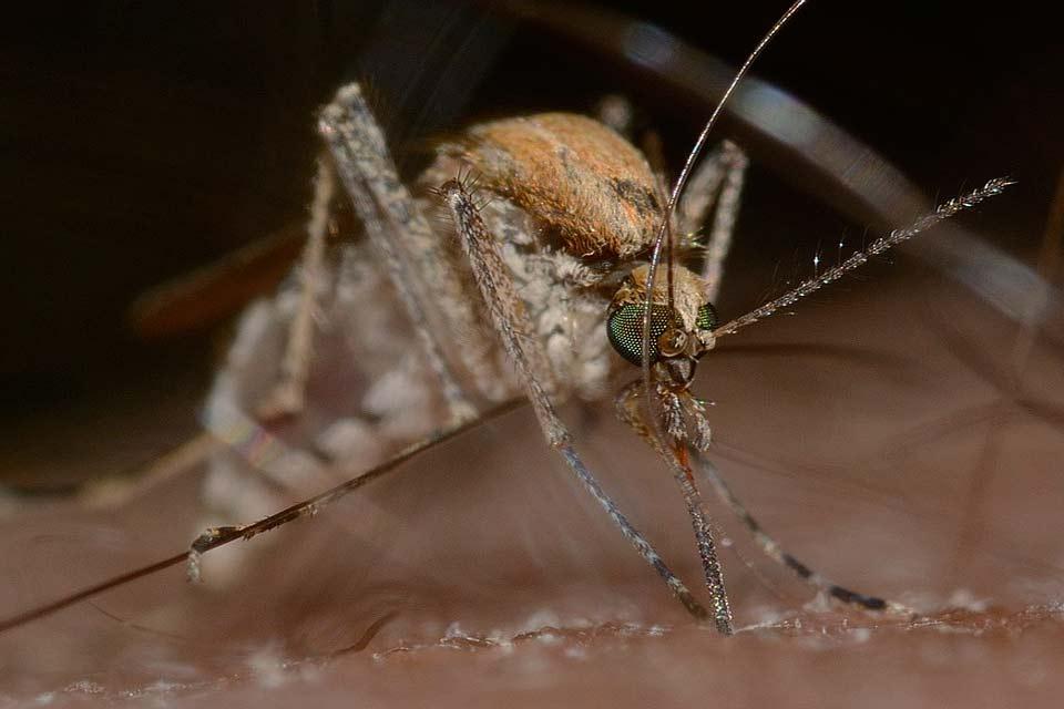 raison pour laquelle les moustiques nous piquent